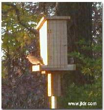 Egads! Bird actually love the Outhouse Bird Feeder