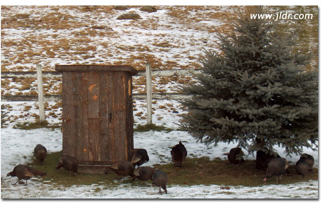 Even the turkeys like this Outhouse!